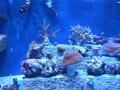 ラグーン(珊瑚礁)