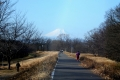 水上公園の土手から見る富士