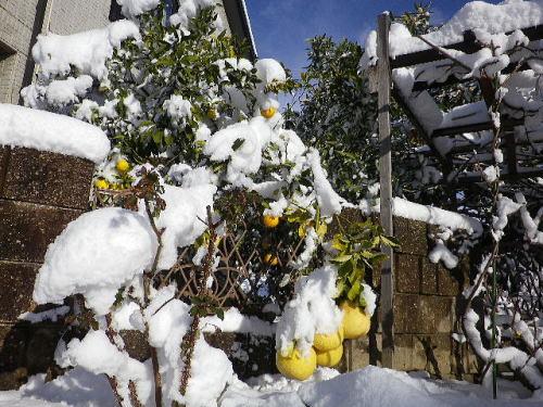 雪 2017 1 15-11
