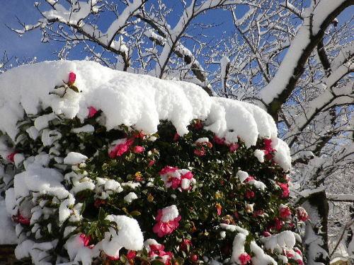 雪 2017 1 15-18