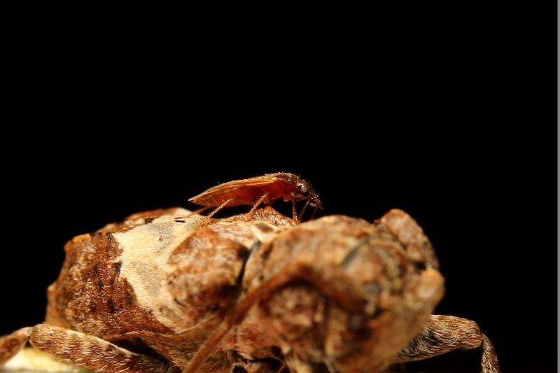 ナカジロサビカミキリ (2)b