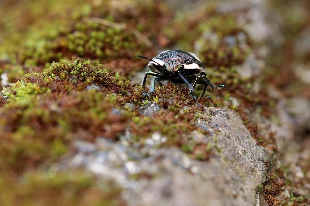アカキン幼虫 (2)b