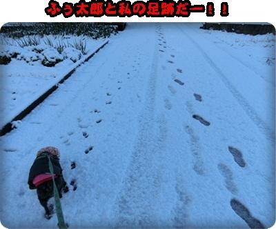 マリン雪040