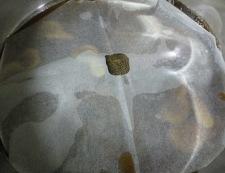 カレイの煮付け 調理②