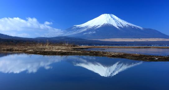 湖面に映える白サギと霊峰富士