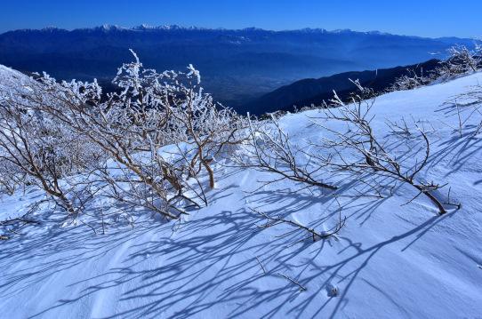 霧氷のダケカンバと南アルプス