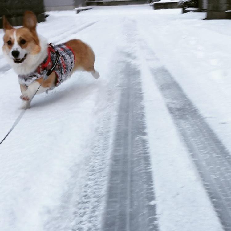 雪の金沢1