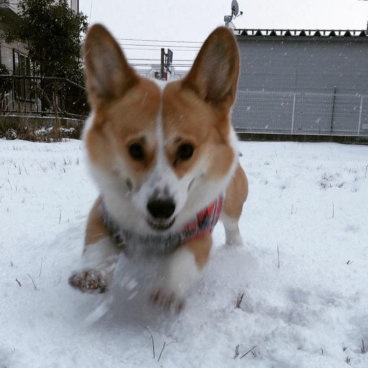 雪の金沢2