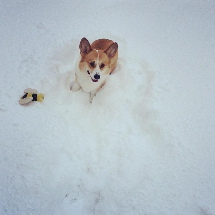 雪の金沢3