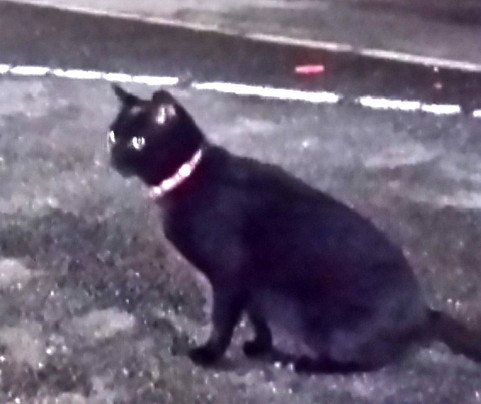 千葉NT黒猫201507-DSC_0012