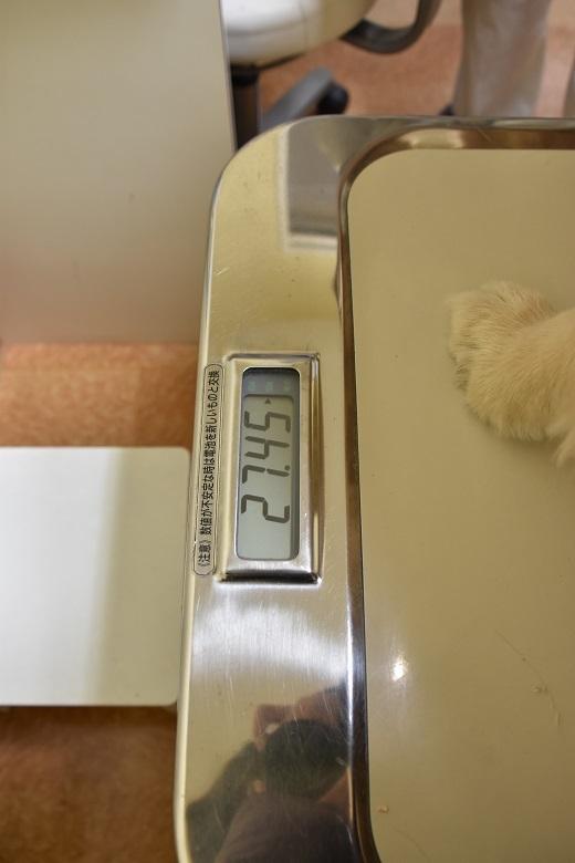 067 体重