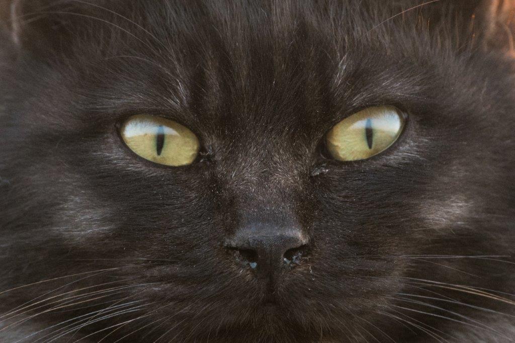 伊予港の猫の目d500ー1-1