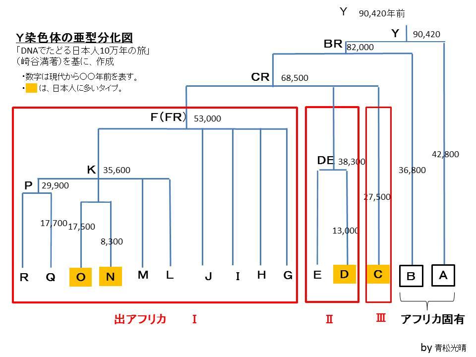 Y染色体系統図