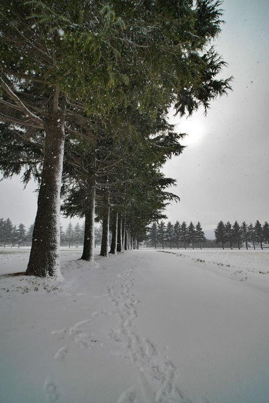 P1080027初雪A