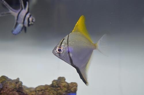monodaku (33)