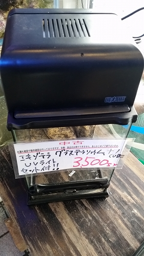 s-20170206_114241.jpg