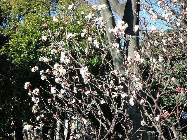 春よ来い 3