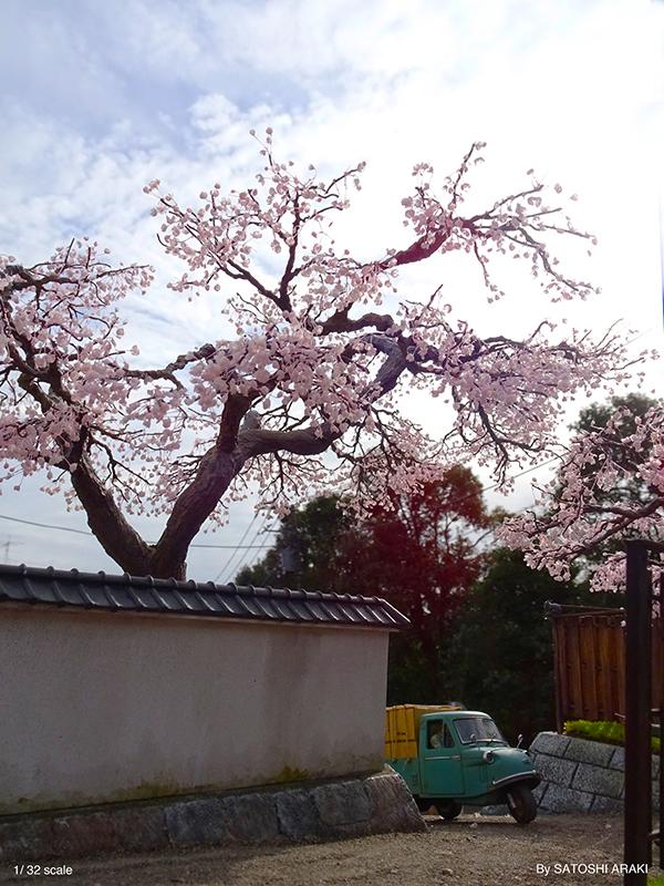 桜完成1 _B