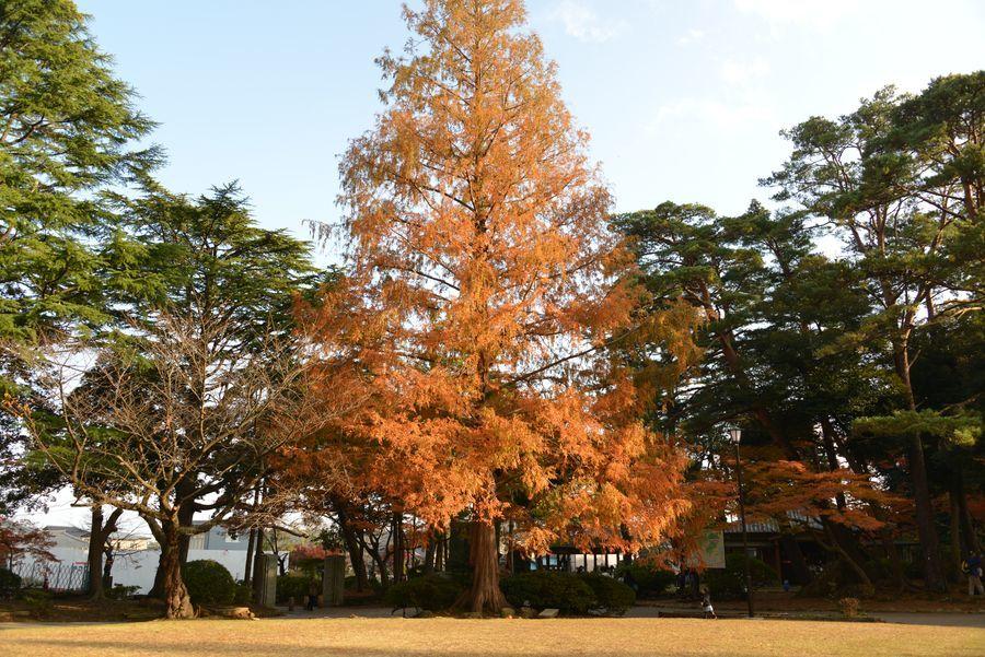 秋の日差し 2本の木-1