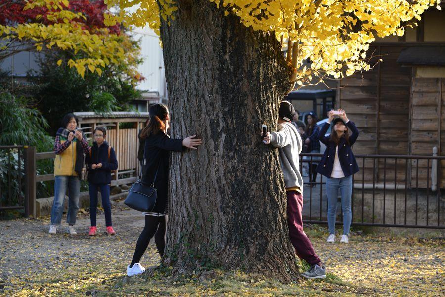 秋の日差し 2本の木-5