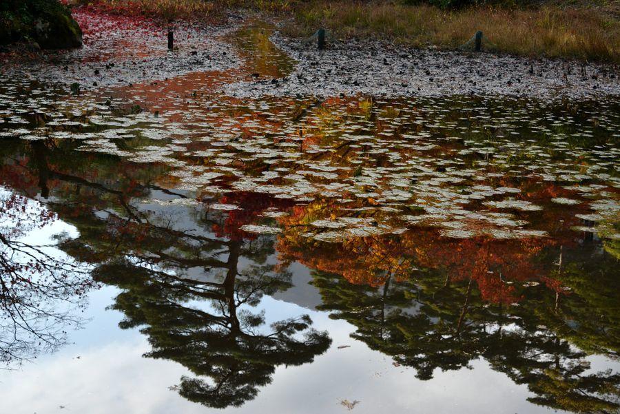 池に映して-3