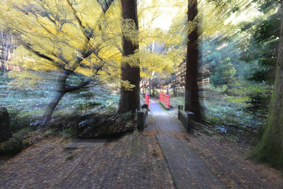 石瀬神社 もみじ-1