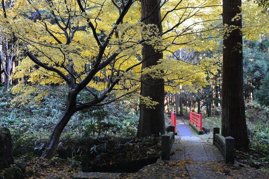 石瀬神社 もみじ-2