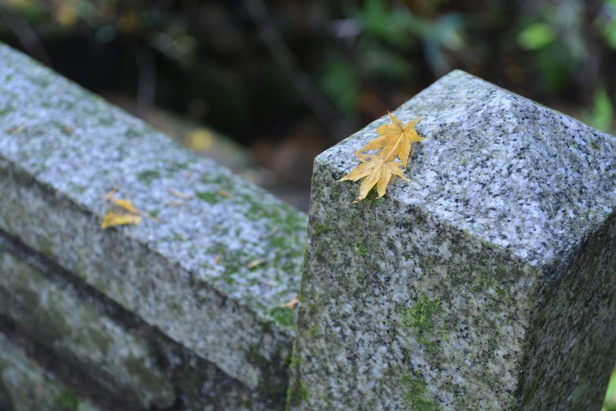 石瀬神社 もみじ-5