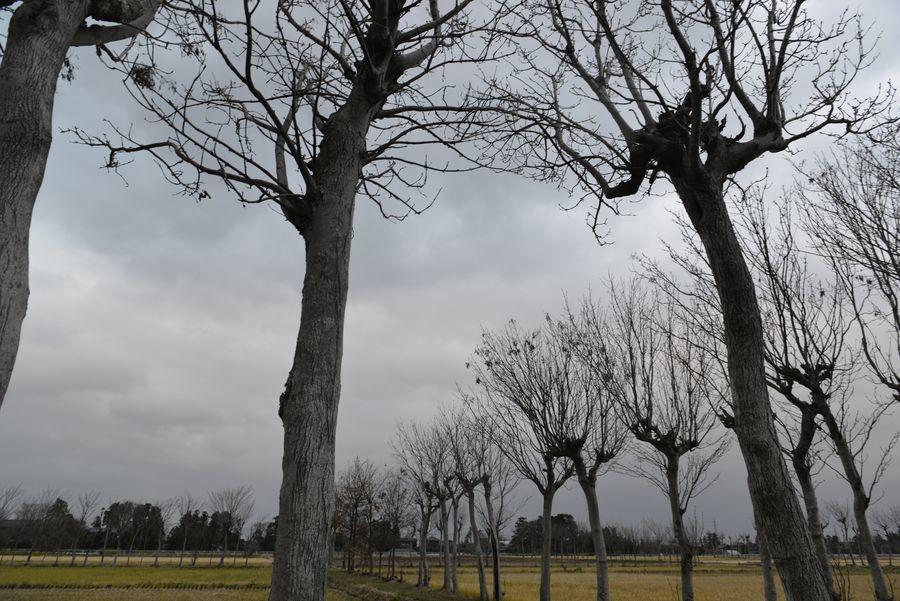 冬を待つはざ木-1