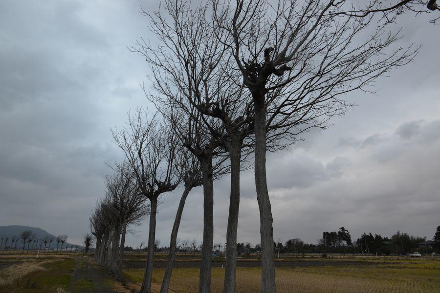 冬を待つはざ木-2