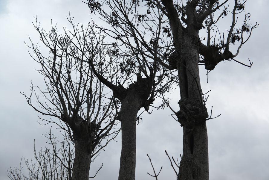 冬を待つはざ木-3
