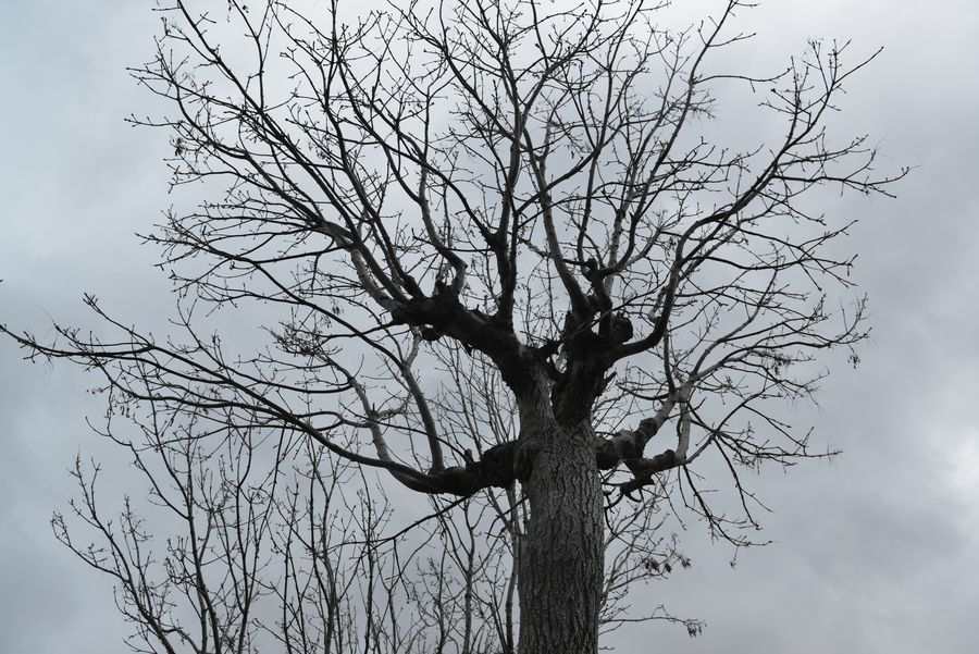 冬を待つはざ木-4