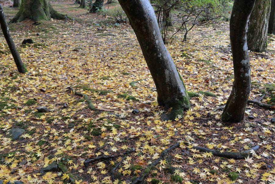 公園の落ち葉-1