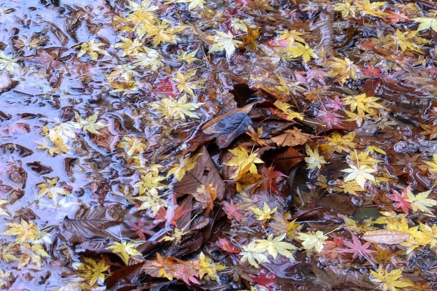 公園の落ち葉-4