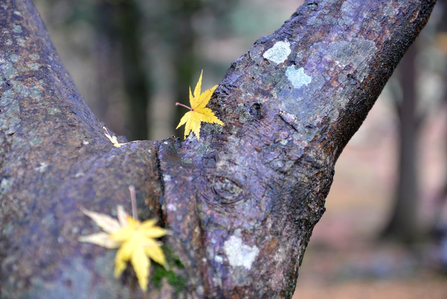 樹に落ち葉-1