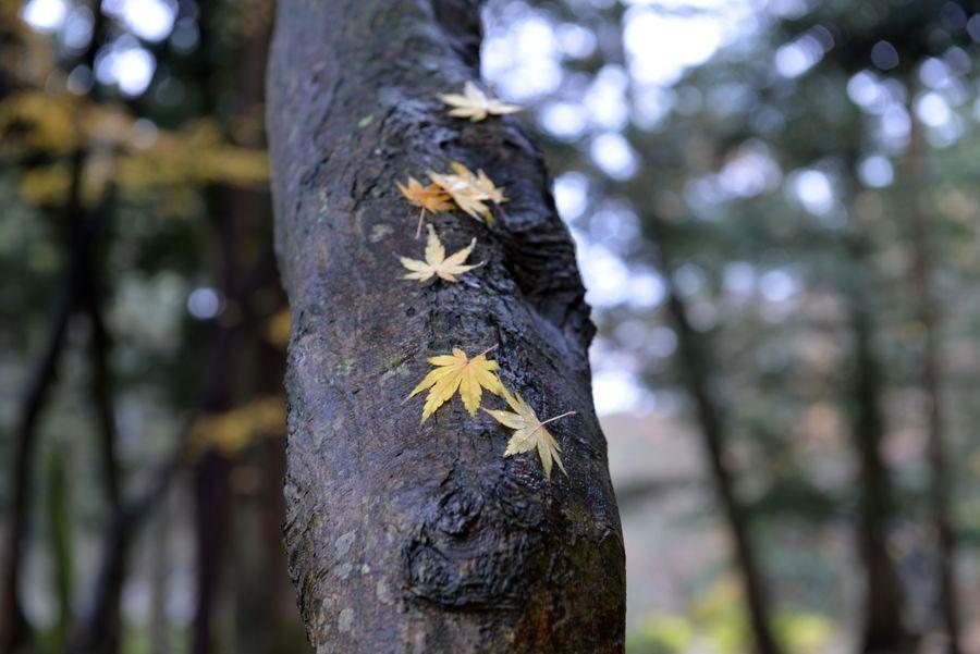 樹に落ち葉-2