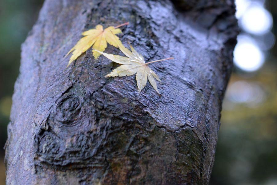 樹に落ち葉-4