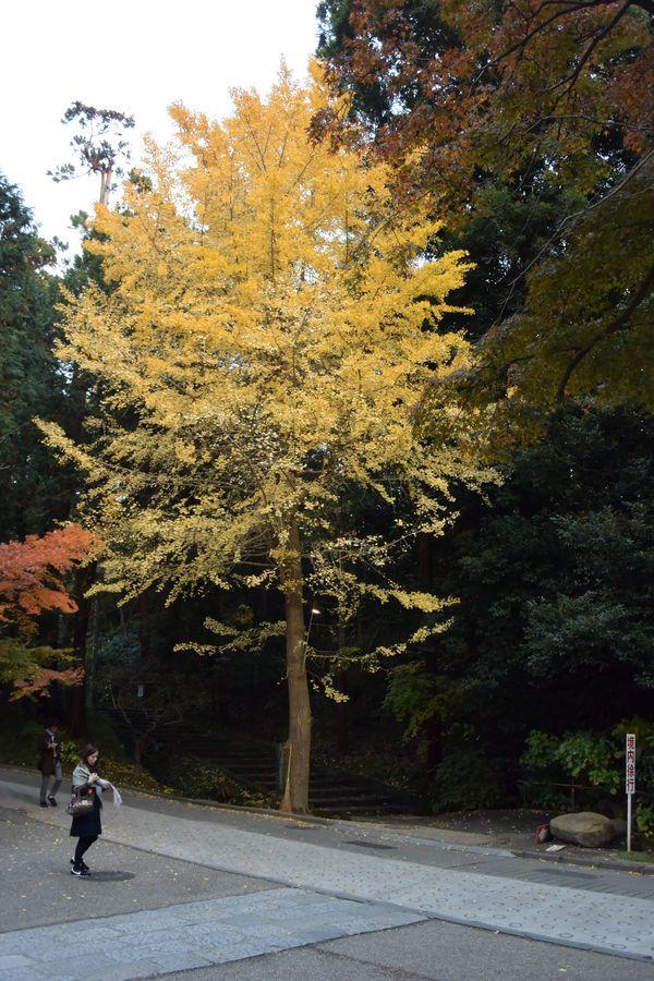円覚寺 紅葉-5