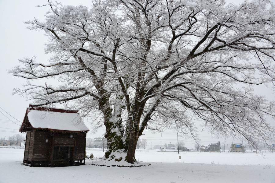 初雪 2つの神社-2