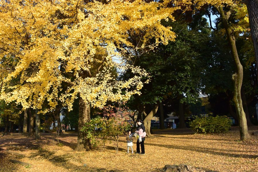 上野の銀杏-1