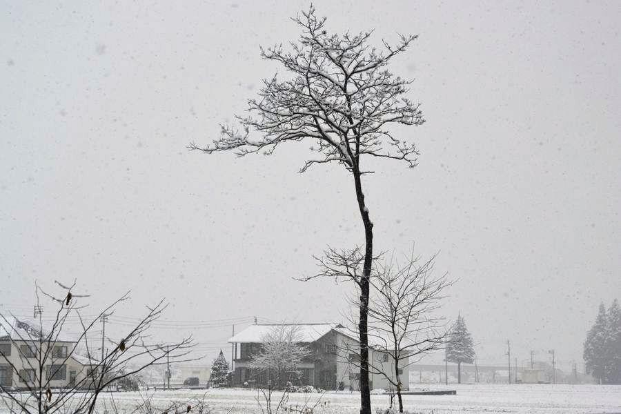 雪は降る-1