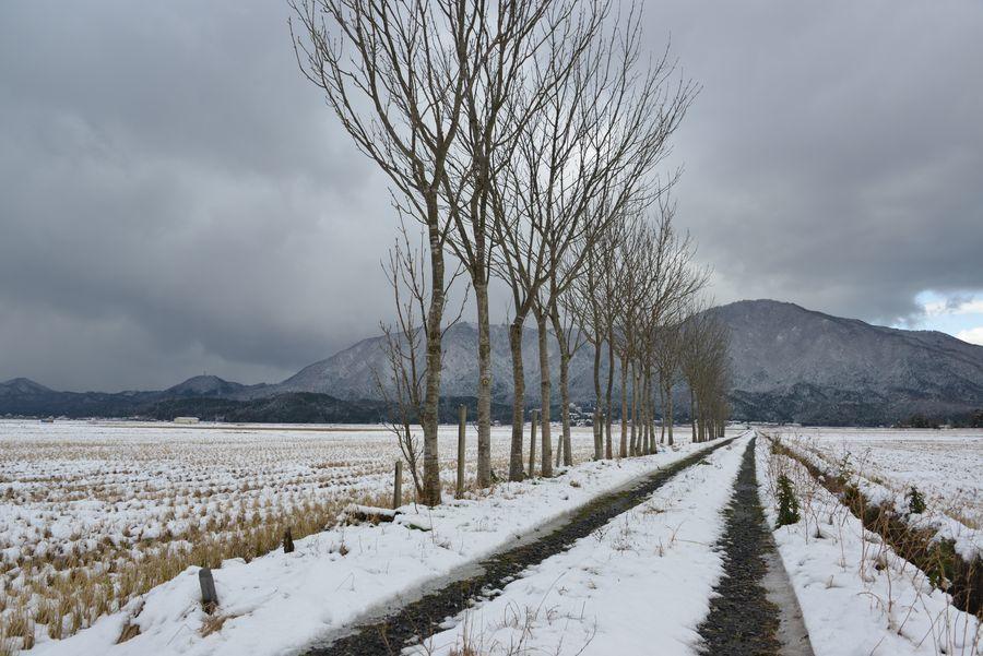冬のはざ木-1