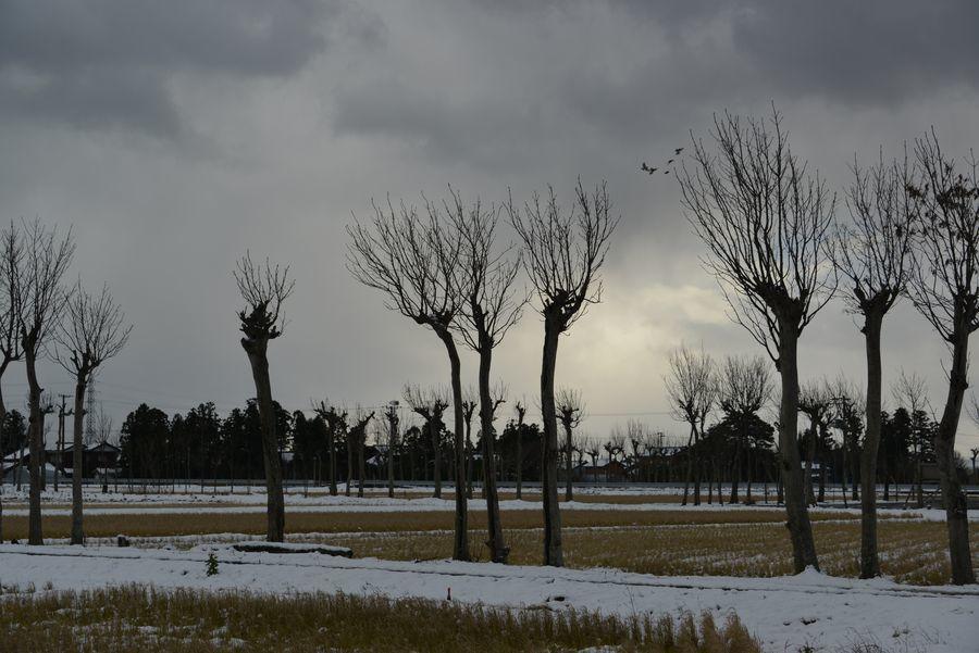 冬のはざ木-3