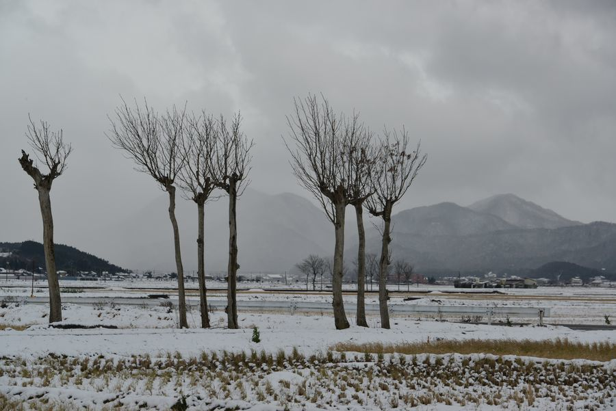 冬のはざ木-4