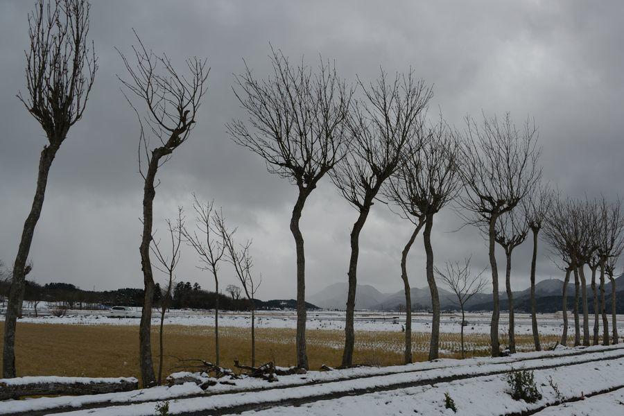 冬のはざ木-5