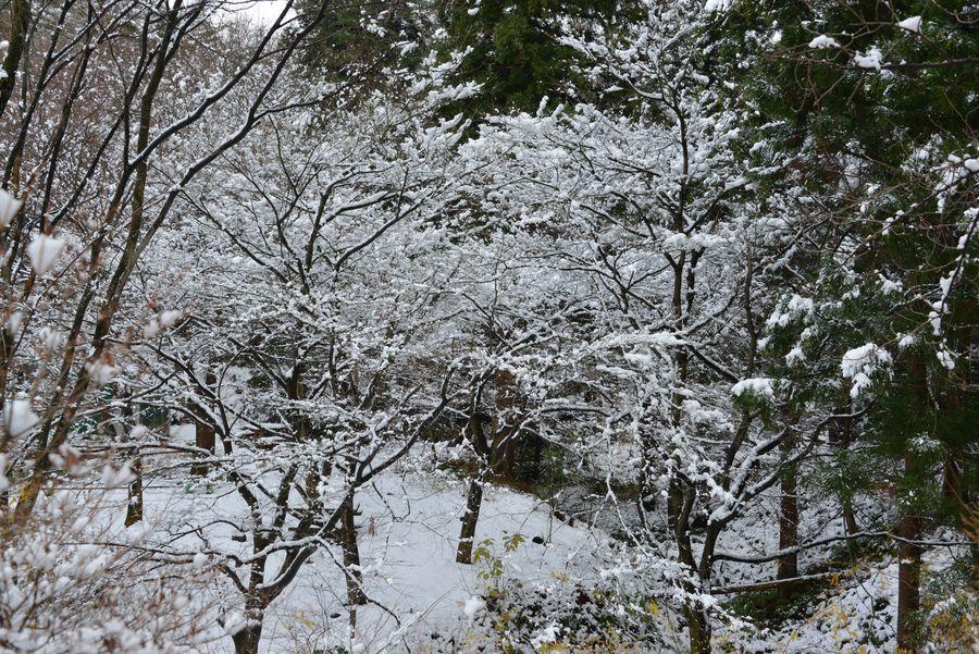 雪の城山公園-1