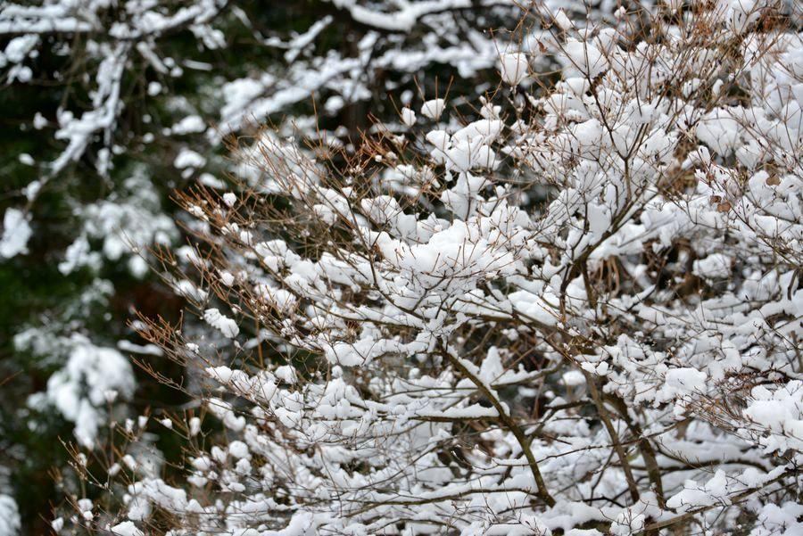 雪の城山公園-3