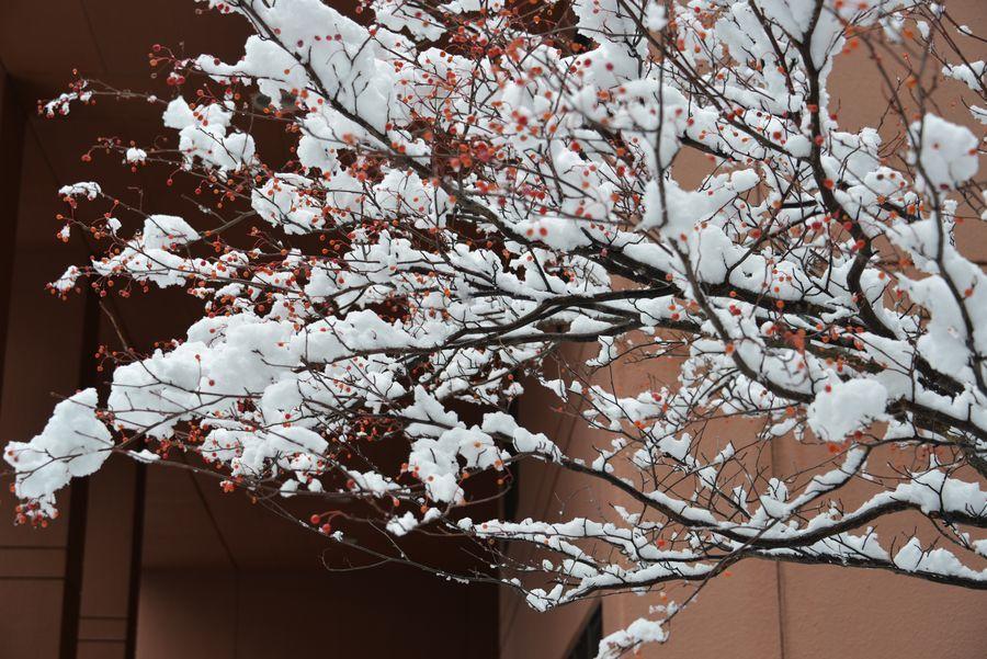 雪の城山公園-4