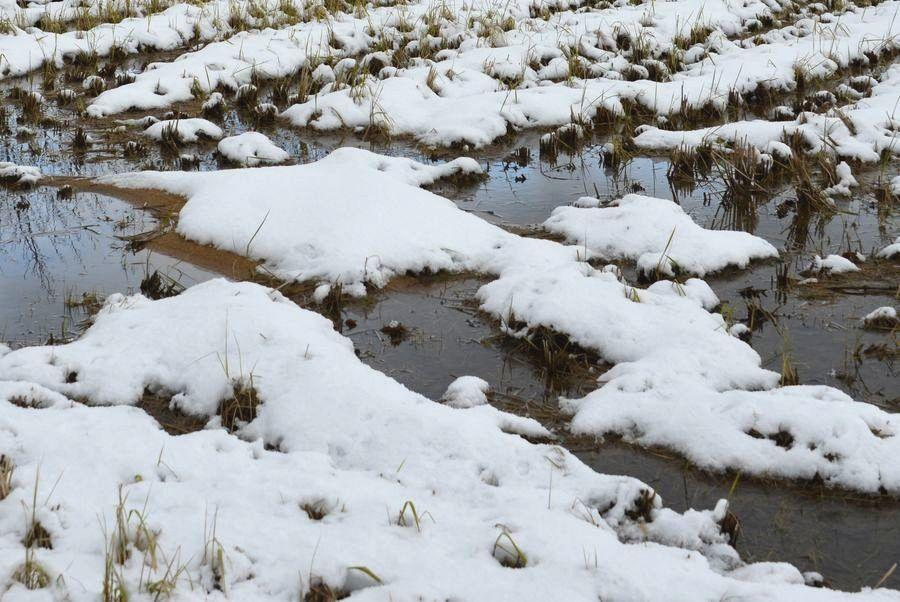 雪の水田-3