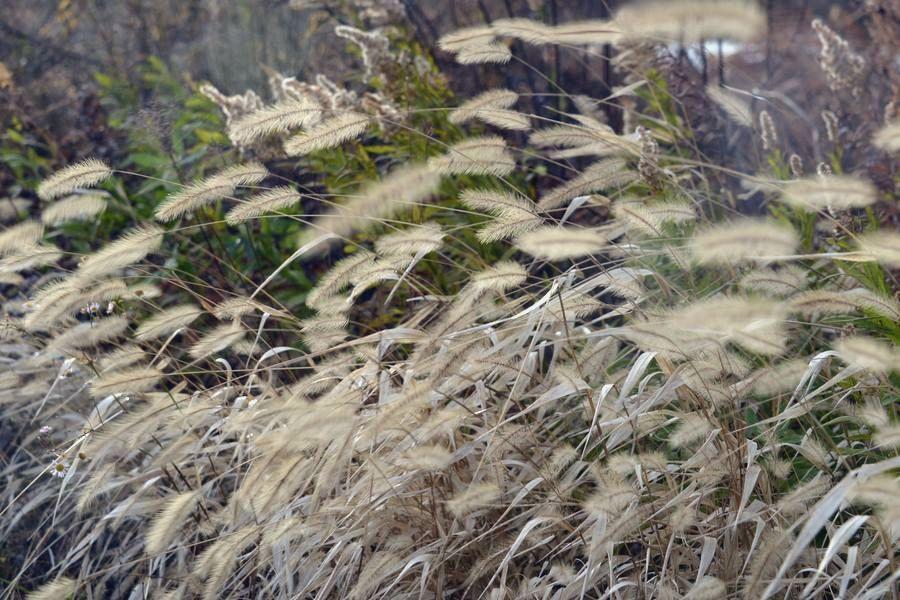 枯れた植物-3